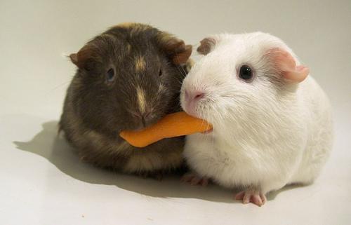 Sharing is Hard.